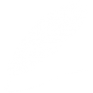 quill-drawing-a-line